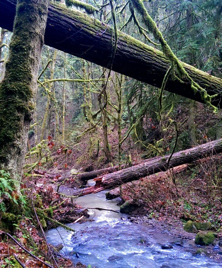 Hiking through the forest around Portland
