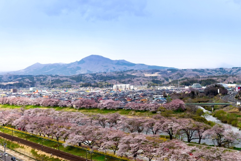 View of Cherry Blossom or Hitome Senbon Sakura festival at Shiroishi riverside and city, Funaoka Castle Ruin Park, Sendai, Miyagi, Japan